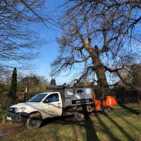 Commercial Tree Felling Experts
