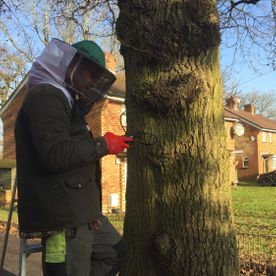 Outstanding Tree Surgery